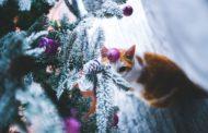 Přišel čas Vánoc a s nimi dekorace do bytu. Jaké si letos vyberete vy?